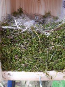 nestkast in Goudse Hout met mos